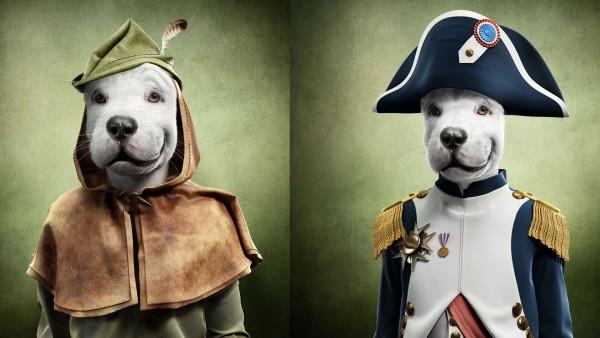 SERASA : DOGS