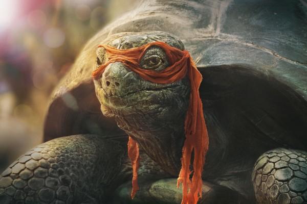 Vodaphone Turtle